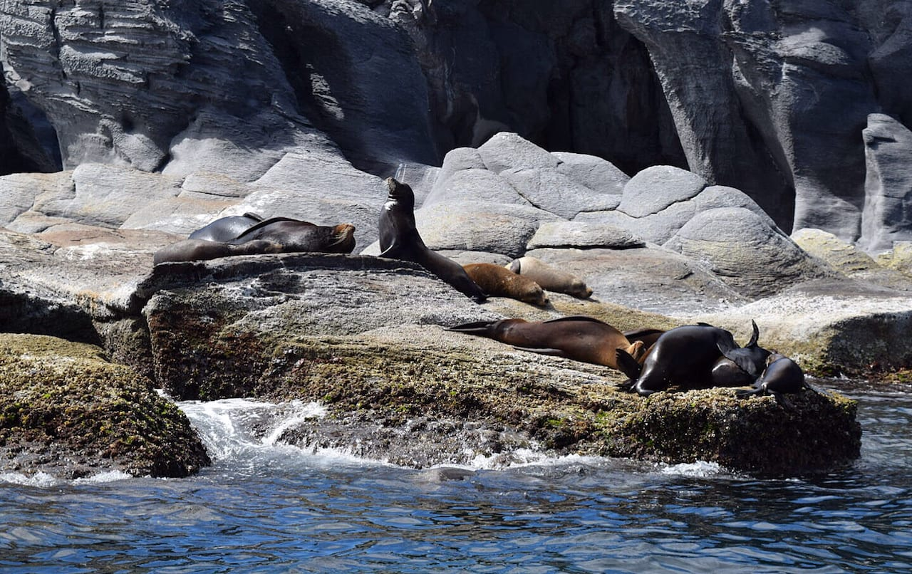 Sea lions on Coronado Island, Loreto Mexico